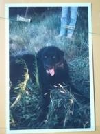 KOV 504-2 - DOG, CHIEN, PHOTO - Perros