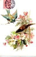 CPA  -   Fleurs Et Moineaux     - écrite - Fleurs