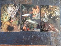 Lot De 5 Cartes De L'aquarium De Banuyls Sur Mer - Fish & Shellfish