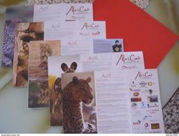Z4 NAMIBIA N. 5 RIVISTA AFRICAT FOUNDATION PROTEZIONE TUTELA FELINI - SEE VEDI FOTO - Libri, Riviste, Fumetti