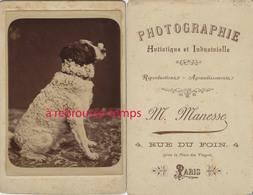 Grande CDV (Cabinet) Chien Qui Pose, Regard En Coin! Photo Artistique Et Industrielle M. Manesse Rue Du Foin à Paris - Old (before 1900)