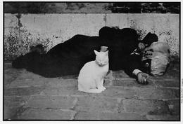 CPSM -  Photo -  Chat, Blanc, Compagnon D'un Homme Sans-abri Avec Un Grand Coeur - Katten