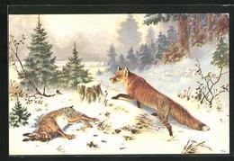AK Fuchs Mit Erbeutetem Hasen Im Winterwald - Animaux & Faune