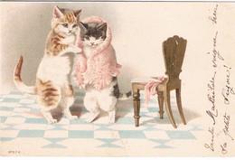 Chats Habillés  -dressed  Cats -katzen-  Poezen - Katten