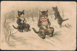 Chats Habillés  -dressed  Cats -katzen-  Poezen - Gatos