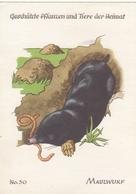 Maulwurf Ngl #F5250 - Animals