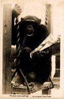 MONO // MONKEY. MICKEY NEWS SELLING LIVERPOOL ZOO PARK. - REAL PHOTO - Monkeys