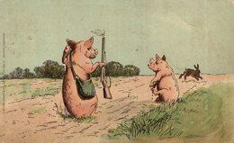 CERDOS // PIGS - Cerdos