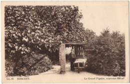 CPA 29 - ROSCOFF (Finistère) - 18. Le Grand Figuier, Couvrant 660 M2 - LL (petite Animation) - Roscoff