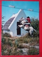 KOV 505-3 - CHEVAL, HORSE, CAMARGUE, DRESSAGE - Chevaux