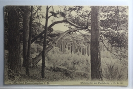 AK Ostseebad Brunshaupten Waldmotiv Am Fuchsberg 1918 Gebraucht #PG890 - Deutschland