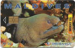 Maldives - Dhiraagu (chip) - Morey Eel - 2MLDGIB - Chip Siemens S37, 50MRf, Used - Maldivas