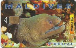 Maldives - Dhiraagu (chip) - Morey Eel - 187MLDGIB - Chip Siemens S30, 50MRf, Used - Maldiven