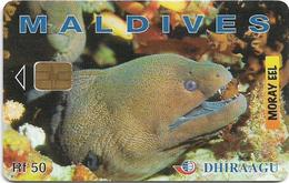 Maldives - Dhiraagu (chip) - Morey Eel - 202MLDGIB - Chip Siemens S30, 50MRf, Used - Maldivas