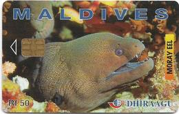 Maldives - Dhiraagu (chip) - Morey Eel - 256MLDGIA - Chip Siemens S35, 50MRf, Used - Maldivas
