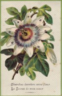 Fleur En Relief Circulée En 1907 - Andere