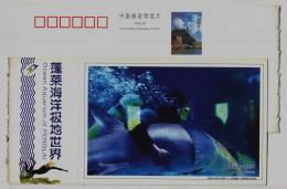 China 2005 Penglai Ocean Aquarium Postal Stationery Card Shark Scuba Diving Diver - Marine Life