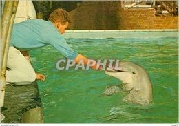 CPM Tursiops Truncatus Bottle Nosed Dolphins Dauphin - Scozia