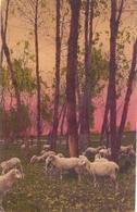 BARLETTA 1917 POST CARD BARI ANNULLO SPECIALE  (FEB20421) - Barletta
