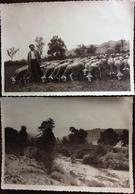 2 PHOTOS (papier Agfa Brovira) Format 17,50 X 12,50, Vue Pont, Berger Avec Ses Moutons, Gr Plan Berger/Moutons, à Situer - Foto