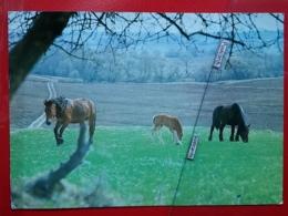 KOV 505-7 - HORSE, CHEVAL, - Horses