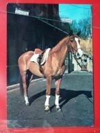 KOV 505-7 - HORSE, CHEVAL - Chevaux
