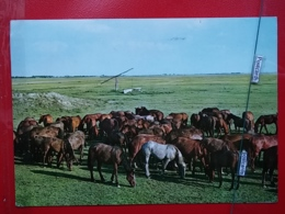 KOV 505-7 - HORSE, CHEVAL, HORTOBAGY, HUNGARY, - Horses