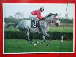 KOV 505-8 - HORSE, CHEVAL, SABAC, SERBIA, HIPODROM, 73, SRPSKI TRIAL STAKES - Chevaux