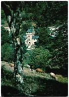 D12 - LEDERGUES - CHÂTEAU DE CASTELPERS-PENSION RESTAURANT/RELAIS EQUESTRE/GRAND PARC/RIVIERE/PÊCHE-Plusieurs Vaches - Autres Communes