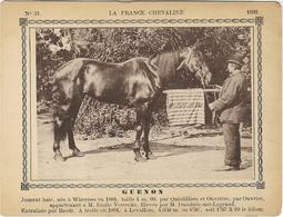 62 WIZERNES CARTON LA FRANCE CHEVALINE GUENON NEE 1884 ELEVE A LEVALLOIS 92 - Documents Historiques