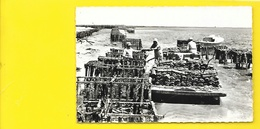 ARCACHON Collecteur D'Huitres Au Bassin (Berjaud) Gironde (33) - Arcachon