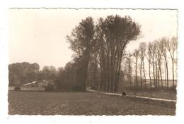 CPA 91 WISSOUS Château De Montjean Route Arbres Murs Château Semi Caché Vue Peu Commune 1950 - Frankrijk