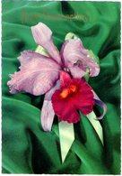 Orchidea Di Buon Onomastico. VG. - Fiori