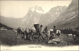 Cp Troupeau Sur L'alpe, Rinder, Männer, Gebirge - Animali