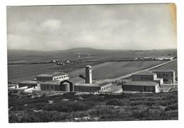 3189 - SANTA MARIA LA PALMA NURRA DI ALGHERO SASSARI 1950 CIRCA - Andere Steden