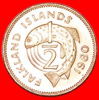 : FISH (1974-1983): FALKLAND ISLANDS ★ 1/2 PENNY 1980! MINT LUSTER! LOW START★NO RESERVE! - Falkland Islands