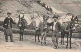 CPA - Transport De La Glace Naturelle à Dos De Mulets - Pyrénées - Autres Communes
