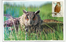 Eurasian Eagle-owl /Hibou Grand-duc , Carte-maximum De Hongrie - Uilen