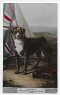 """BUSHIE"" - The Celebrated Australian War Dog - Australie"