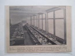 1928 - JENA - Institut Pathologique   - Ancienne Coupure De Presse - Historische Dokumente