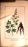 ABSINTHE GRAVURE COLOREE 19° SIECLE RACINE FEUILLES FLEURS DECORATIVE ET SYMBOLIQUE ALCOOL APERITIF 23 X 14 CM VERS 1860 - Other Collections