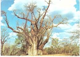CARTOLINA PER ITALY BAOBAB - Zimbabwe