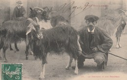 CPA  - Le Chevrier Et Son Troupeau - Toulouse - Elevage