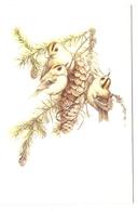 AN 696, MODERN  FOLDING CARD , 110x 160 Mm  ,FINE ART  , BIRDS , Signed MARJOLEIN BASTIN - Vogels