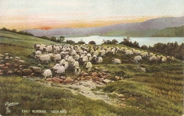 """Early Morning. Lorch Ard"" Tuck Photochrome Scottish Lochs Ser. PC # 4494 - Tuck, Raphael"