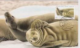 Australian Antarctic Territory 2018 Crabeater Seal,Group Of Seals, Maximum Card - Maximum Cards