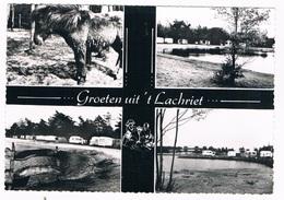 B-7632   LICHTAART : Cafe-Rest-Dancing 't Lachriet - Kasterlee