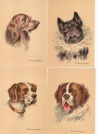 LOT  17 CP - Illustrateur H. Vincent Anglade - M. Barré & J. Dayez - Portrait Chien - Chiens - Illustrators & Photographers