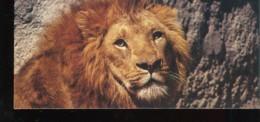 Fiche Illustrée NESTLE Les Merveilles Du Monde N°  236 LE LION D'ASIE - Nestlé