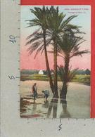 CARTOLINA NV ALGERIA - SCENES ET TYPES 6200 - Paysage Du Sud - LL - 9 X 14 - Scene & Tipi